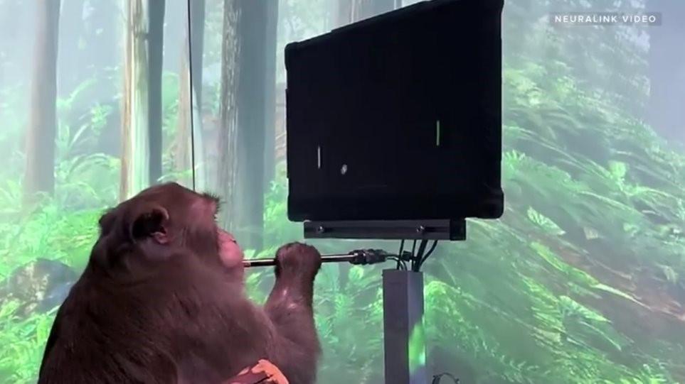 Έλον Μασκ: Παρουσίασε Μαϊμού Με Ασύρματα Τσιπάκια Να Παίζει Βιντεο Παιχνίδι Με Το Νου Της