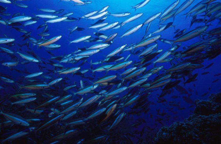 Απαγόρευση Αλιείας