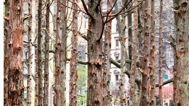 «Δάσος φάντασμα», μια εγκατάσταση της Maya Lin στο Μανχάταν