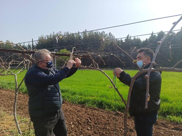 Συμπαραστεκόμαστε Στους Παραγωγούς Ακτινιδίων Που Οι Καλλιεργειεσ Τουσ Επληγησαν Απο Τον Παγετο