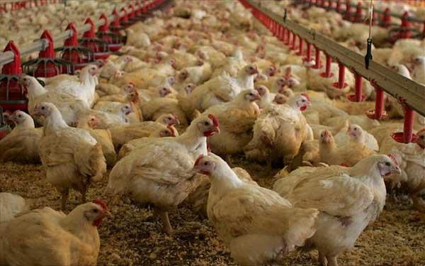 Και Οι Πτηνοτροφικές Μονάδες Εντάσσονται Στον Αναπτυξιακό