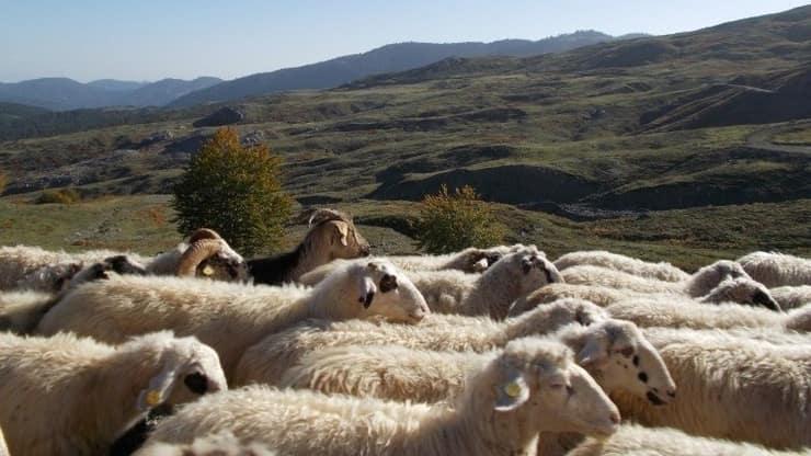 Διευκολύνεις Για Την Ίδρυση Και Τη Λειτουργία Των Κτηνοτροφικών Εγκαταστάσεων