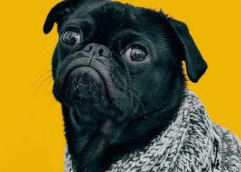 Είναι Επίσημο: Τα Γκρινιάρικα Σκυλιά Είναι Πιο Έξυπνα Από Τα Χαρωπά