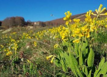 «Λουλούδι Του Δαρβίνου»: Καλλιεργείται Για Πρώτη Φορά, Σε Βουνό Της Δυτικής Μακεδονίας