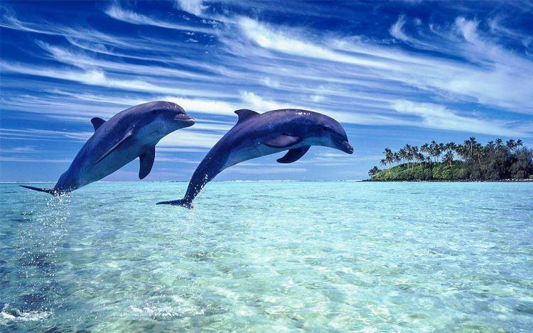 Νεκρά Εντοπίστηκαν Δύο Δελφίνια Και Μία Θαλάσσια Χελώνα Σε Παραλίες Της Βόρειας Ελλάδας
