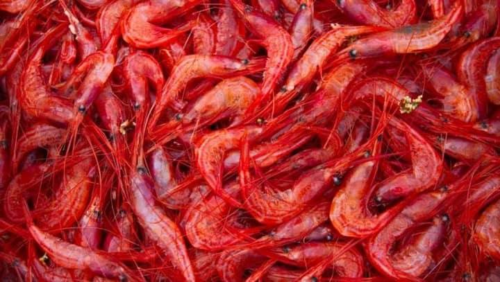 Οι Όροι Αλιείας Για Το Συμιακό Γαριδάκι