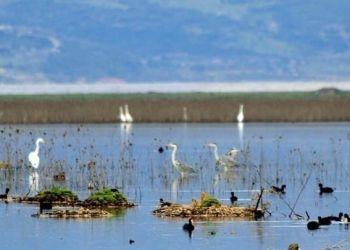 Υπάρχουν περίπου 50 δισ. πουλιά στη Γη