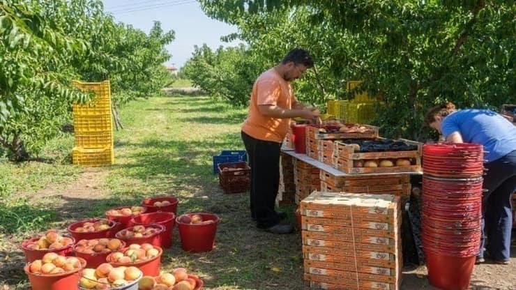 Tα Αγροδιατροφικά Προϊόντα Στην «Προμετωπίδα» Των Ελληνικών Εξαγωγών