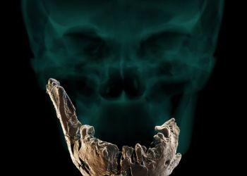 Ανακαλύφθηκε Στο Ισραήλ Ένας Άγνωστος Έως Τώρα Homo, Ο Nesher Ramla