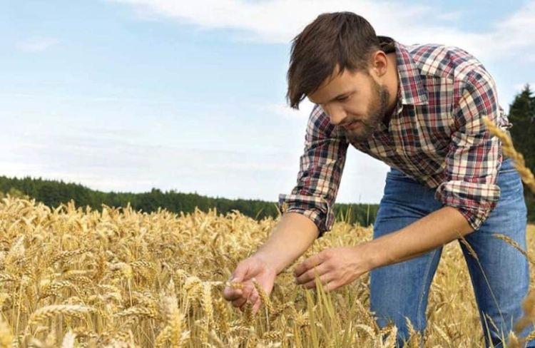 Νέοι Αγρότες: Ποιοι Κινδυνεύουν Με Απένταξη Από Το Πρόγραμμα