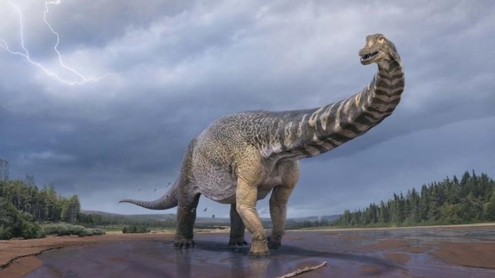 Ο δεινόσαυρος «Αυστραλοτιτάν» είχε μήκος όσο ένα γήπεδο μπάσκετ και ύψος 6,5 μέτρων