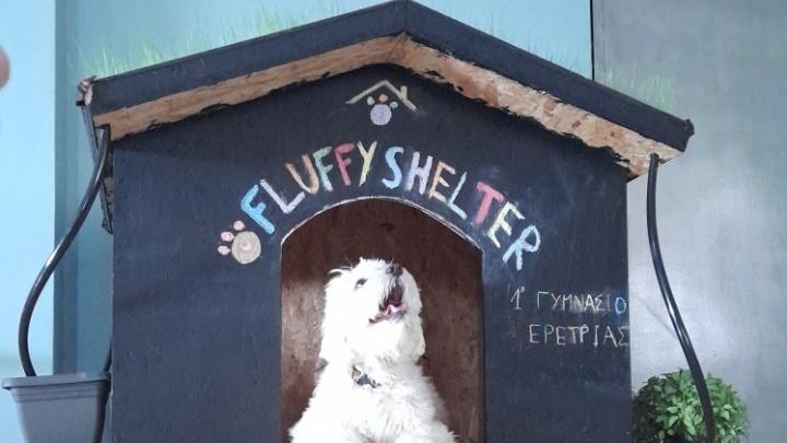 Σκυλόσπιτο με Roof Garden, φτιαγμένο από οικολογικά υλικά, κατασκεύασαν μαθητές Γυμνασίου της Ερέτριας