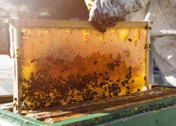 Ενισχύεται Η Μελισσοκομία