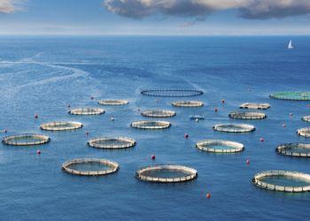 Οικονομική ενίσχυση σε επιχειρήσεις υδατοκαλλιέργειας