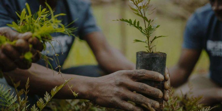 Πως Ο Κορονοϊός Επηρεάζει Το Περιβάλλον