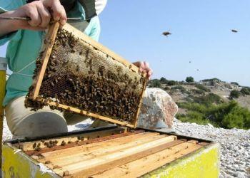 Κρατική ενίσχυση 20 εκατ. σε μελισσοκόμους και χοιροτρόφους