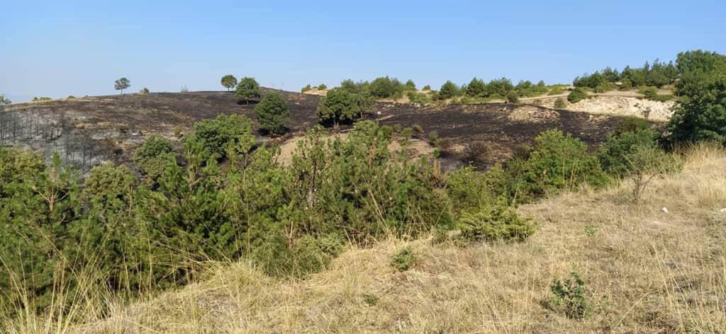 ΕΛΓΑ: Υποβολή Δηλώσεων Ζημίας για τις Πυρκαγιές 2021