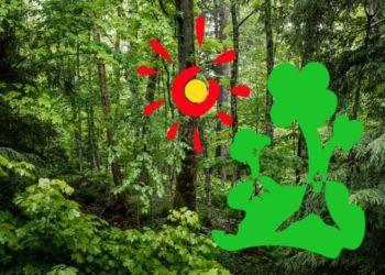 Χαρίζω μια μέρα από το Καλοκαίρι μου στο Δάσος