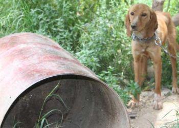 Αυτό κι αν πόνεσε… – Πρόστιμο 61.400 ευρώ σε ιδιοκτήτη σκύλων γιατί τα είχε δεμένα