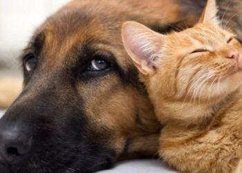 Στείρωση ή αποστολή Dna για τα ζώα συντροφιάς – Όλα όσα προβλέπει το νομοσχέδιο που κατατέθηκε στη Βουλή