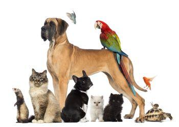 4 Οκτωβρίου 2021 Παγκόσμια Ημέρα Ζώων