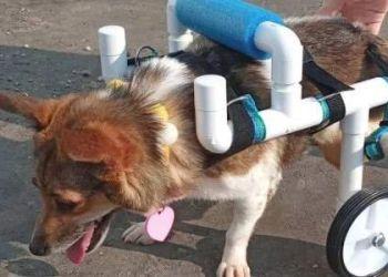 Μαθήτρια από τη Μινεσότα κατασκευάζει αμαξίδια για ανάπηρα σκυλάκια και γατάκια