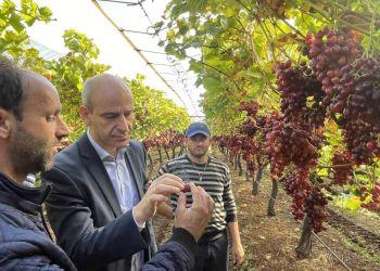 Στους Αγροτικούς Συνεταιρισμούς ΠΕΣΚΟ και ΣΠΕΚΟ ο Μπαραλιάκος για τις ζημιές στα σταφύλια Crimson